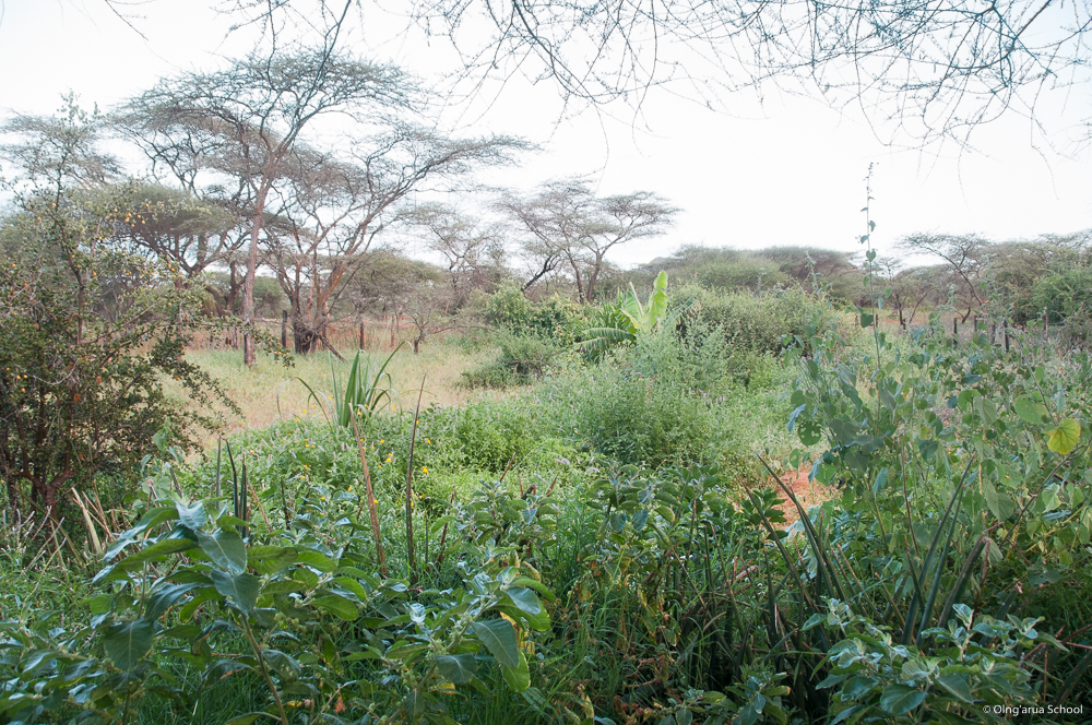 Lush vegetation in the school's conservation area