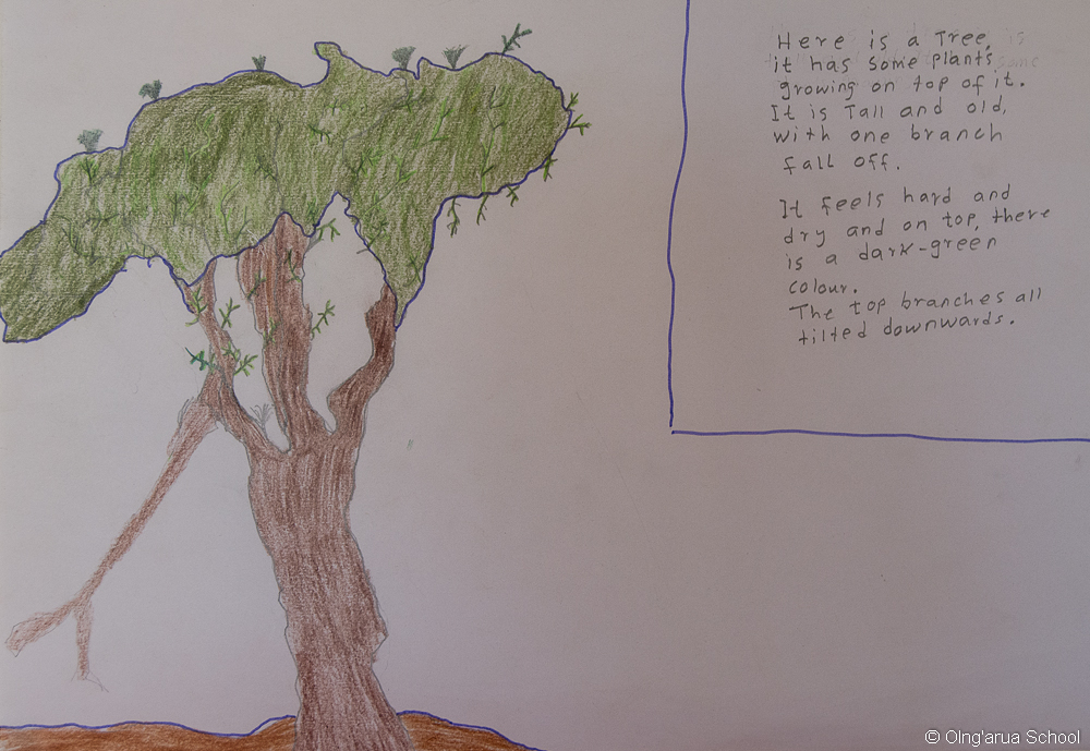 Manuel's Tree