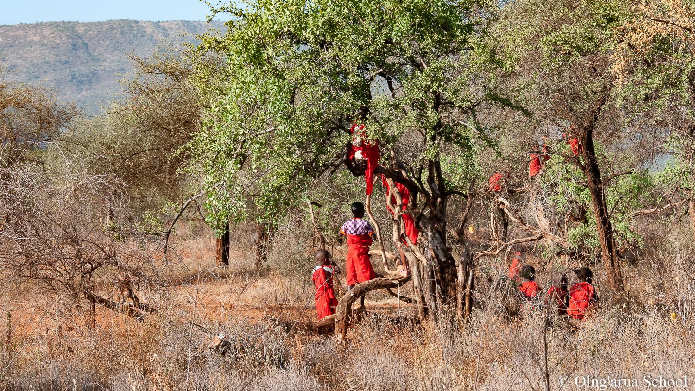 The bush babies of Olng'arua School