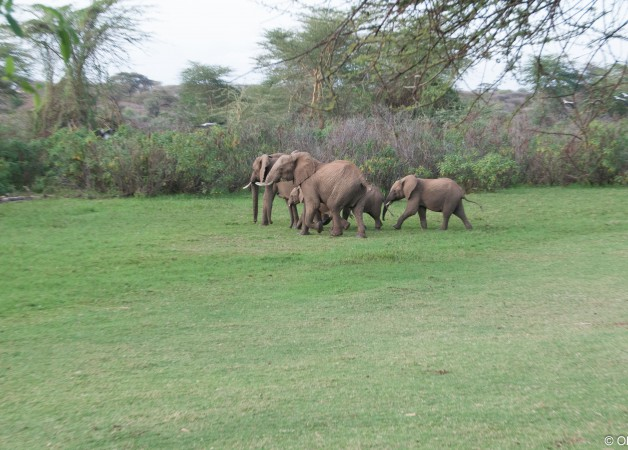 Elephant on the playing field