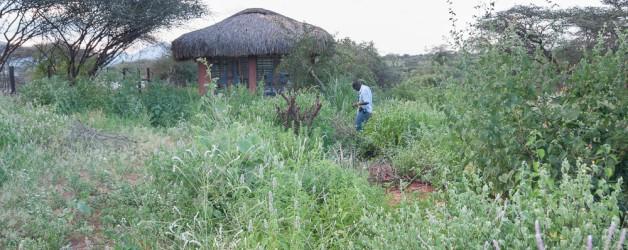 Olng'arua School's Conservation Area