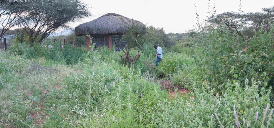 Olng'arua School's Conservation Area