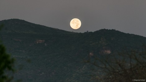 Full Moon Setting Over Il'Ngwesi
