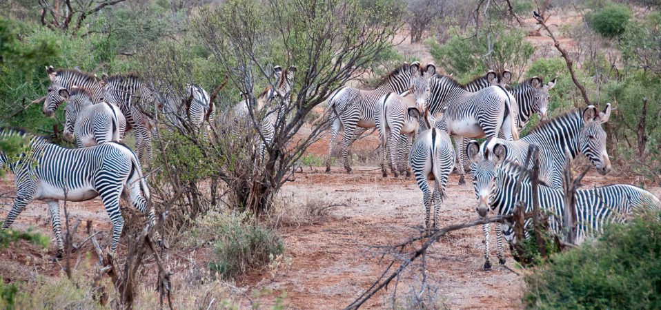 Olng'arua and wildlife
