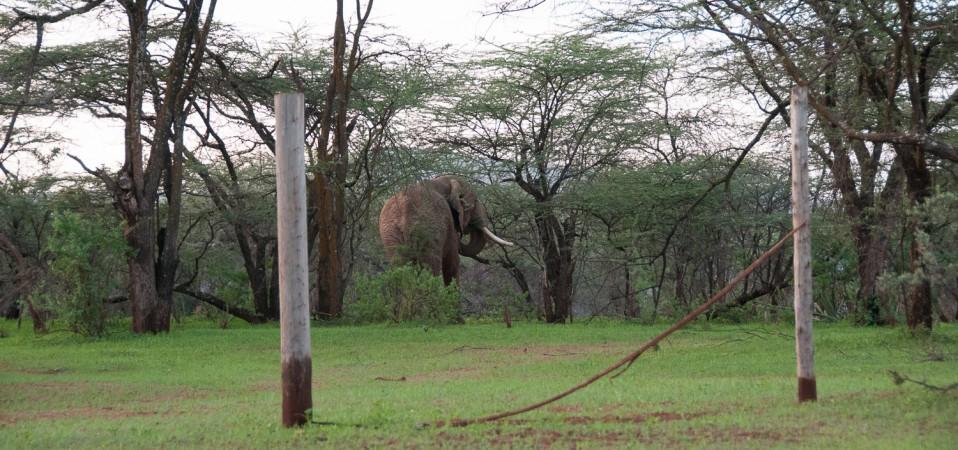 Can elephants do the high jump?