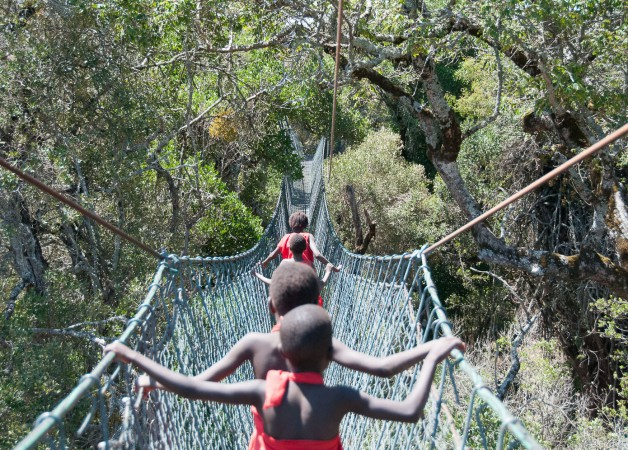 The Canopy Walkway in the Ngare Ndare Forest