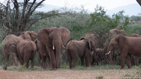 Elephant neighbours