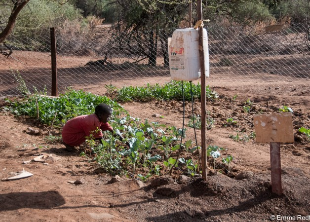 Growing food in a drought is tough!