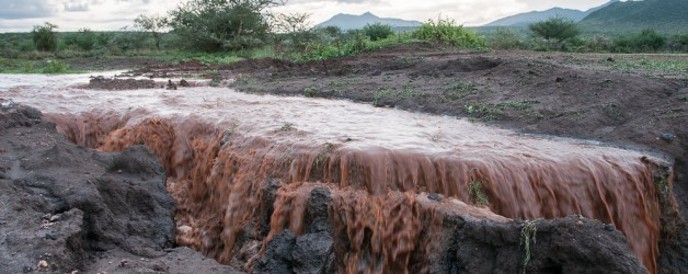 The tragedy of rain on degraded rangelands