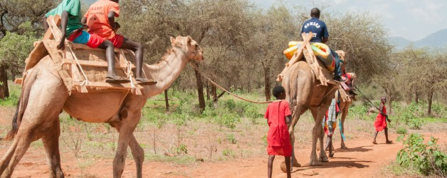 Camel Rides at the Christmas Party
