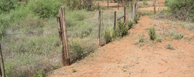 Protecting Land from Overgrazing