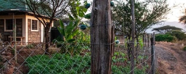 Olng'arua Vegetable Garden (shamba)